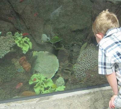 Our visit to Shedd Aquarium in Chicago!