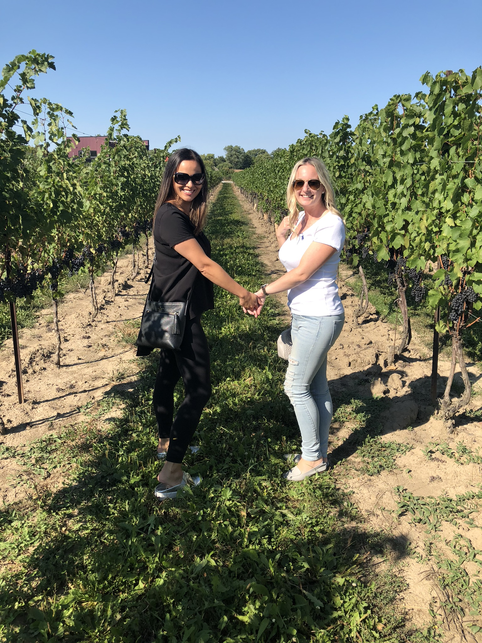 Di Profio Wine Tour with Crush Wine Tours